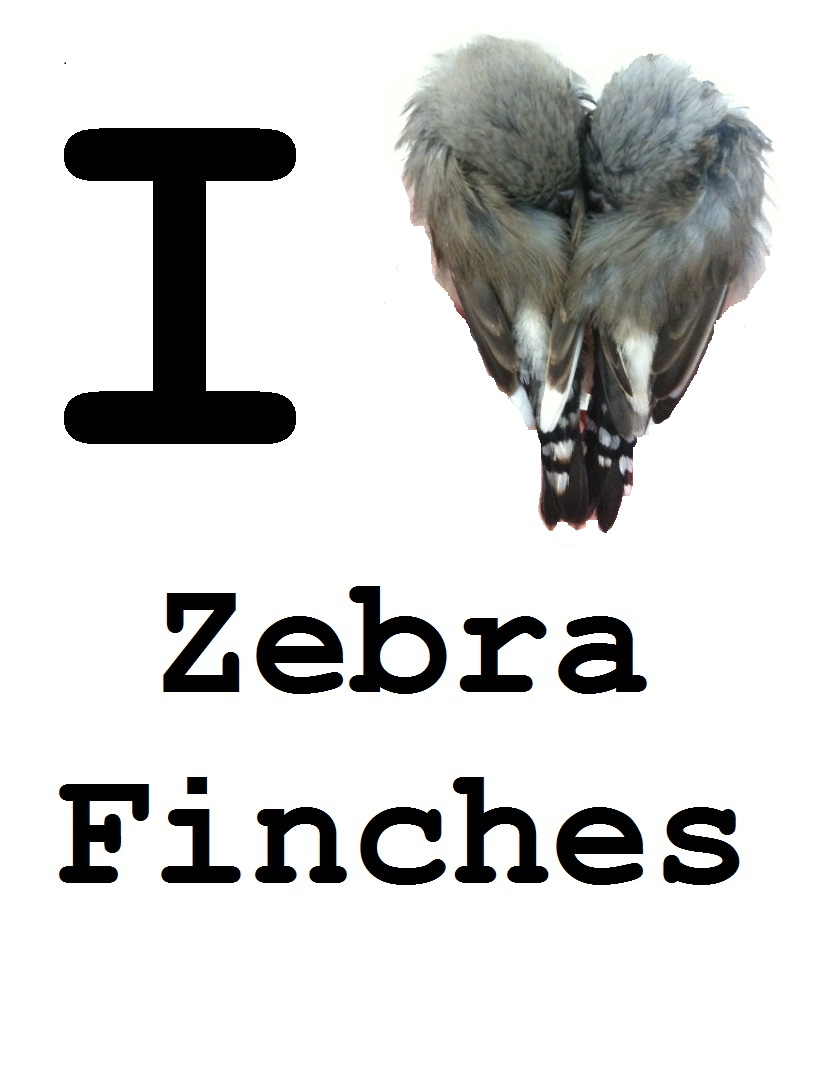 I Love zebra finches